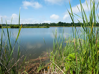 Water captured in stormwater ponds can be used as a source of water for irrigation.